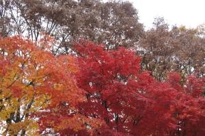 南山公園紅葉(2)