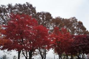 南山公園紅葉(1)