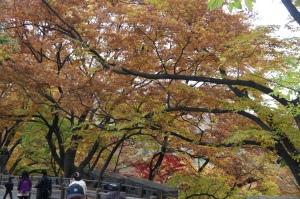 南山公園紅葉(3)