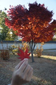 景福宮紅葉