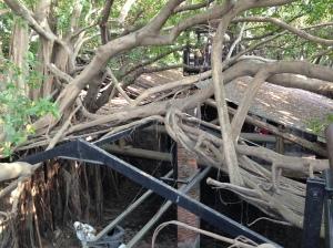 安平樹屋(3)