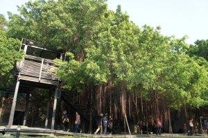 安平樹屋(2)